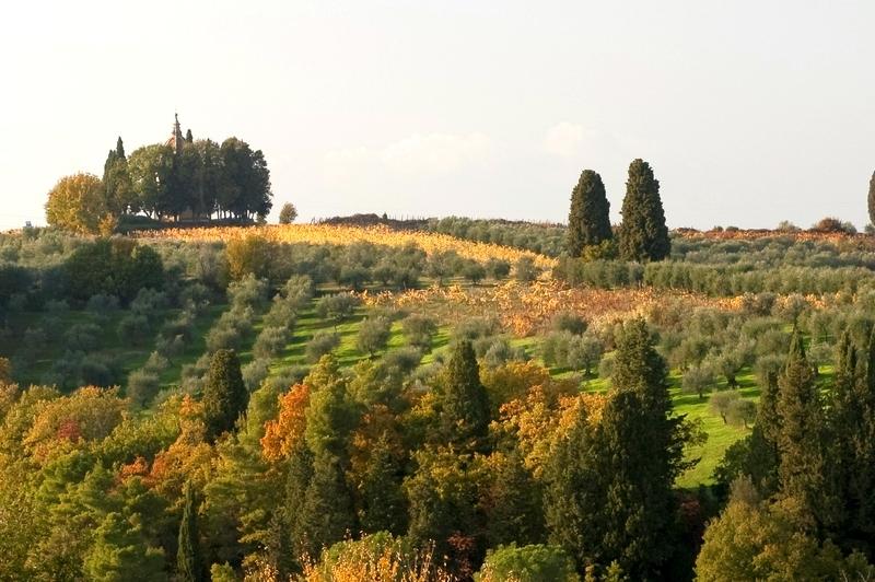 Semifonte - Petrognano